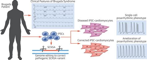 Patient-Specific and Genome-Edited Induced Pluripotent