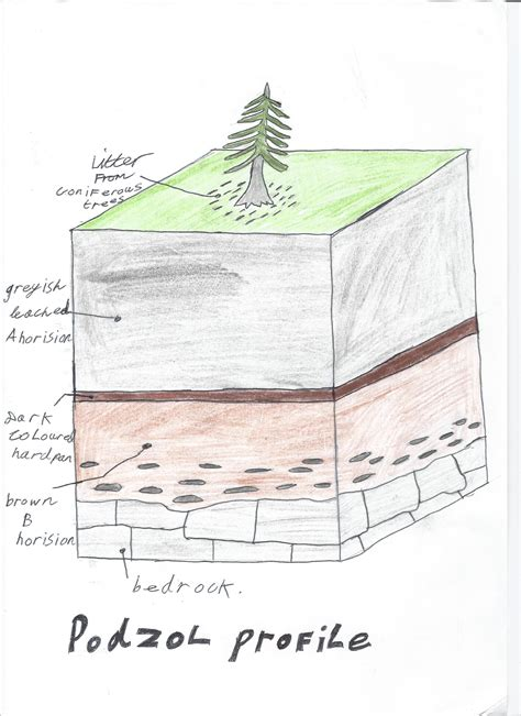 Soil and vegetation | Geography @ Finn Valley College