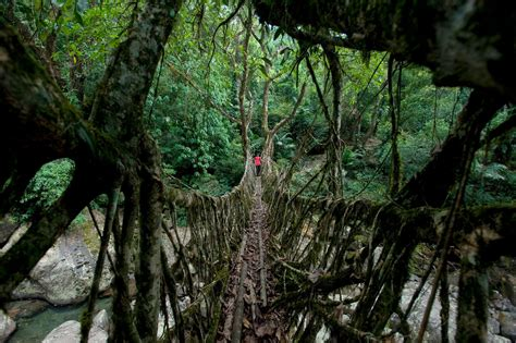 A National Geographic Tour of Interesting Bridges Around