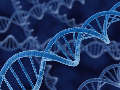 Study Identifies Gene Potentially Responsible for Human