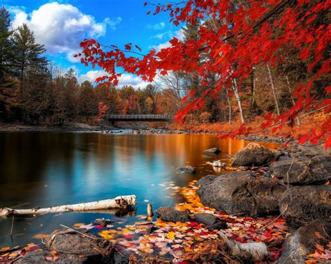 Wallpaper Autumn, Foliage, Lake, Forest, Leaves, HD, 4K