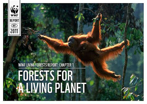 Living Forests Report | WWF