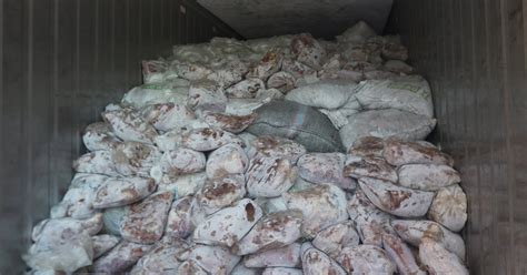 Seizure of 14 Tons of Pangolin Scales in Singapore Sets a