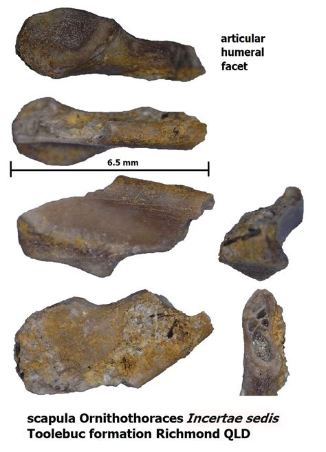 December 2016 Vertebrate Find Of The Month - Fossil of the