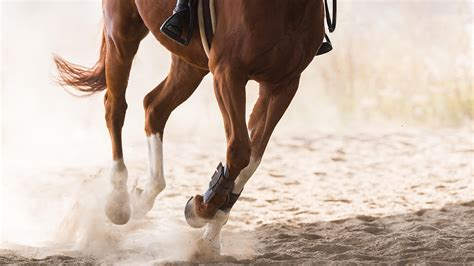 When should we worry about a horse stumbling? *H&H VIP